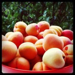 Abricots - 250 g